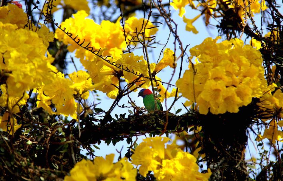 Observação de aves no Parque São Francisco está com inscrições abertas